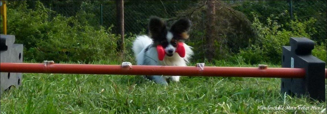 Die Spaßschule für Mensch mit Hund