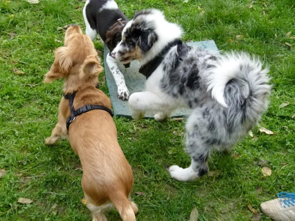 Hundeschule Welpen