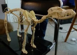 Skelett-Hund Bones