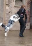 Jerry Lee beim Dogdance