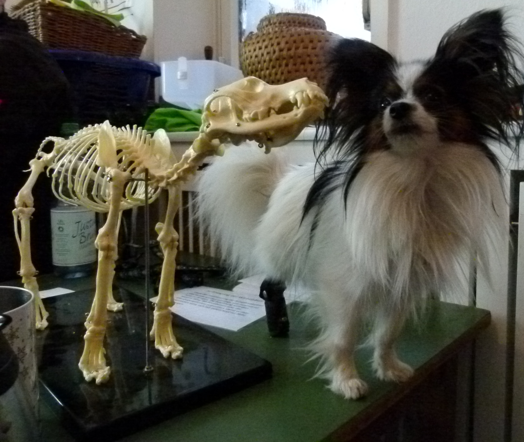 Bones und Cleo