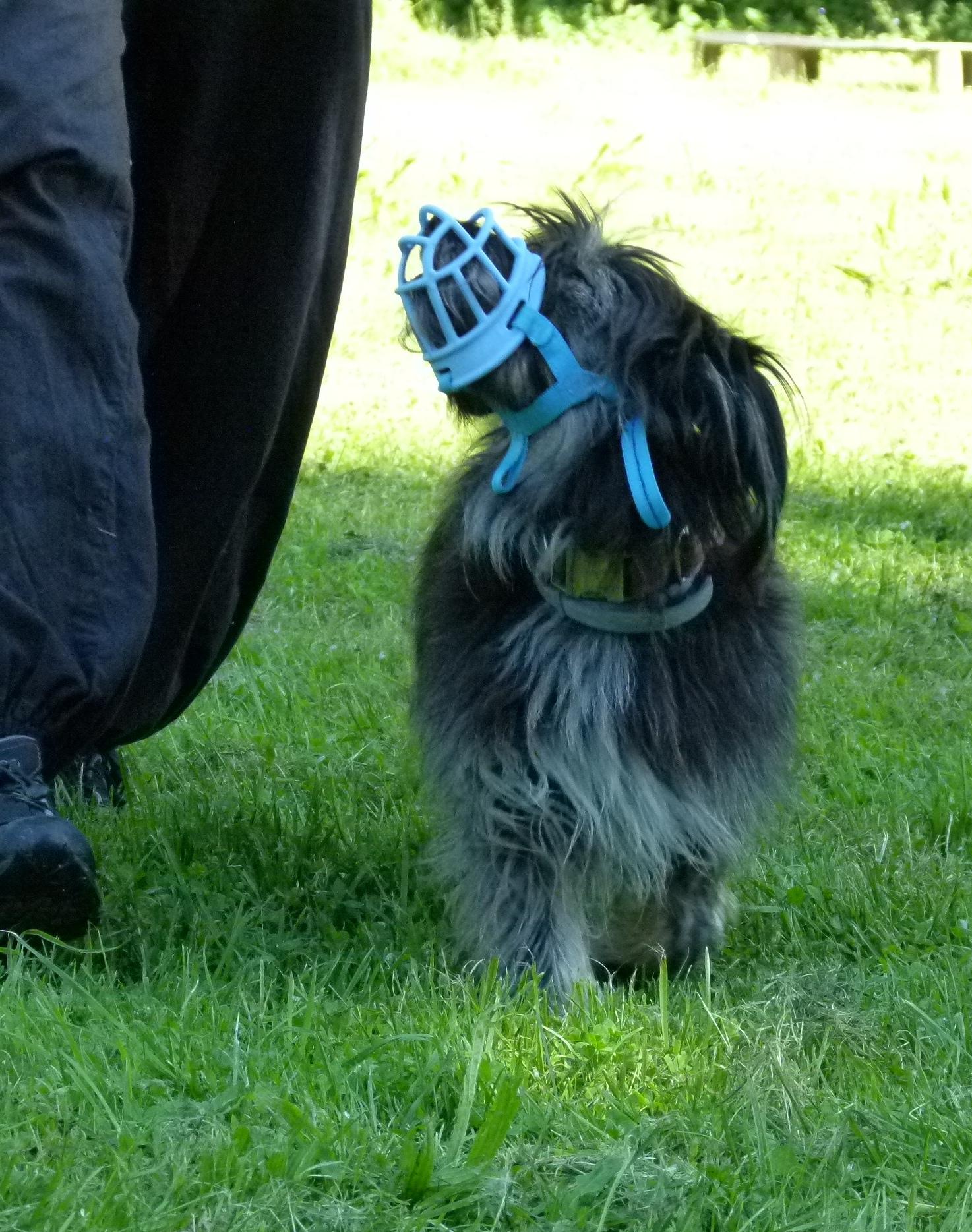 Verhaltensproblem Hund