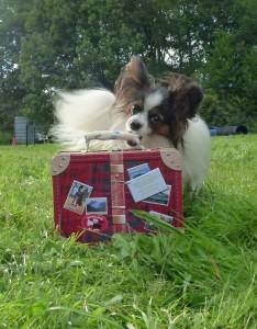 Tolle Tricks für kleine Hunde