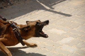 hund-aggressiv-leine