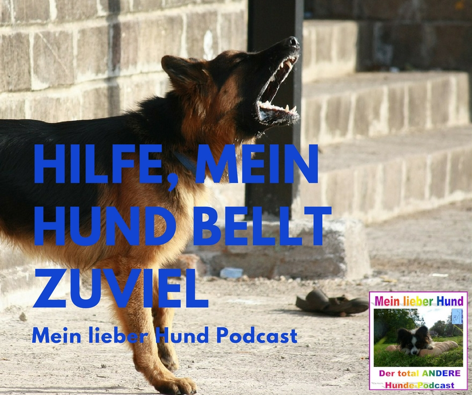 mlh podcast epi 32 hilfe mein hund bellt zuviel. Black Bedroom Furniture Sets. Home Design Ideas