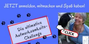 Aufmerksamkeits-Challenge