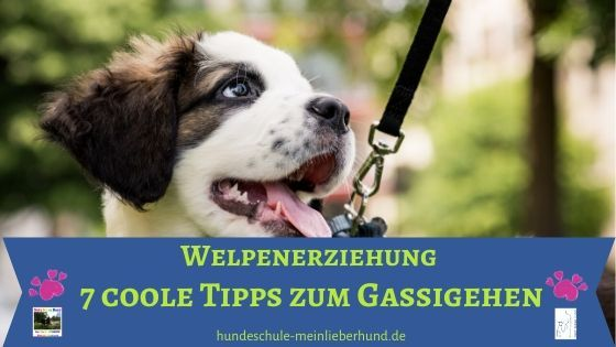 Tipps zum Gassigehen mit Welpe