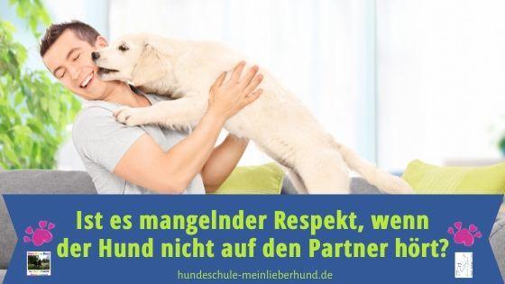 Wenn der Hund nicht auf den Partner hört
