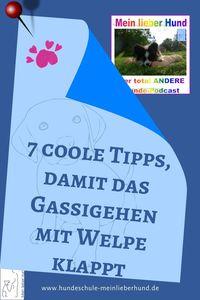 7 Tipps zum Gassigehen