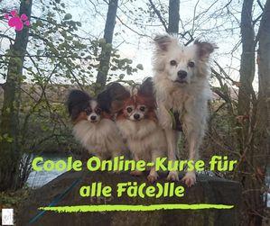 hundeerziehung onlinekurse