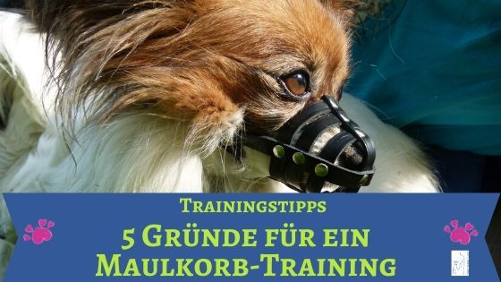 Maulkorb-Training