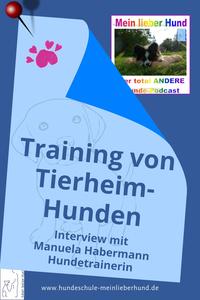 training von Tierheimhunden