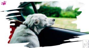 hundeschule - nicht aus dem Auto steigen