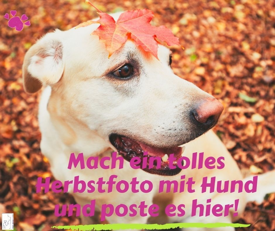 Herbstfoto mit Hund