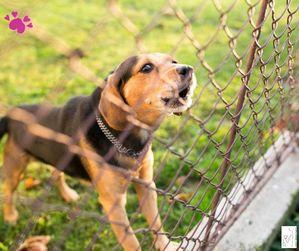 Hund bellt am Zaun