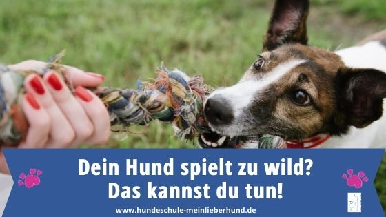 Hund spielt zu wild - wie beenden?