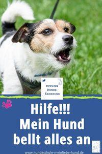Hilfe - mein Hund bellt alles an