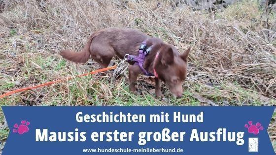 Tierschutzhund - Erster Ausflug