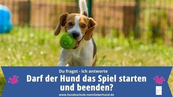 Hundespiel Start und Ende - wer darf bestimmen?