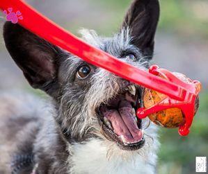 Hund spiel zuviel